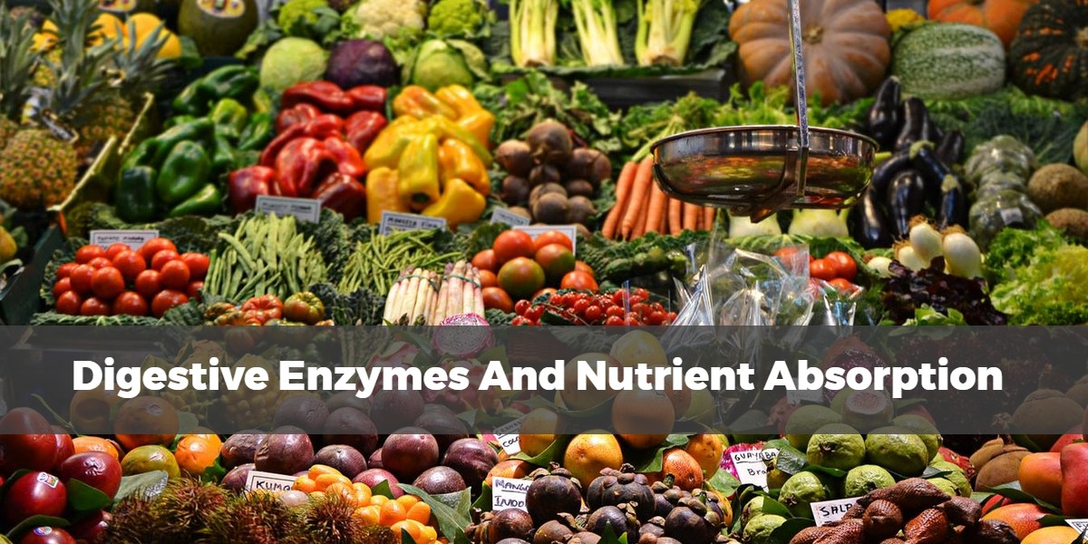 Cover image for article on how digestive enzymes improve nutrient absorption of a graphic over a photo of an assortment of vegetables
