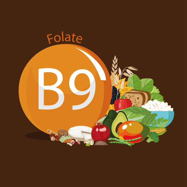 Graphic showing foods containing folate (folic acid)